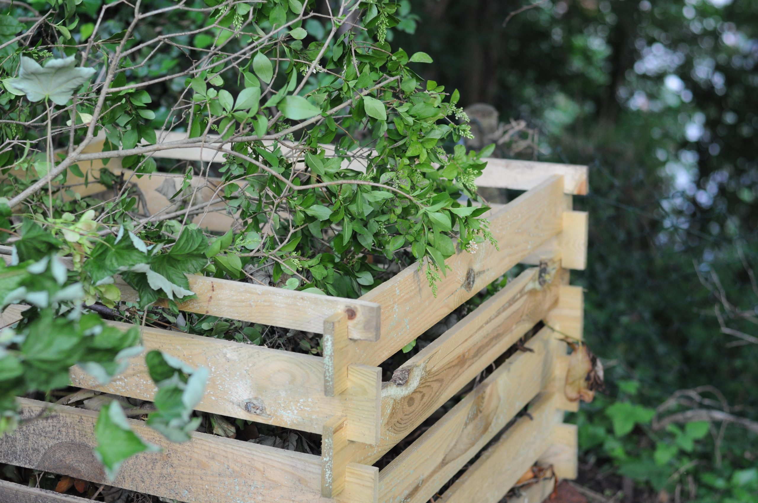 Picture showing garden waste in a wooden composter